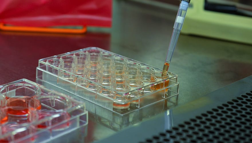 Cell culture in research lab